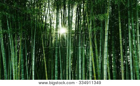 Bamboo Forest In The Sunlight. Natural Ecological Material. Spa Banner, Screensaver