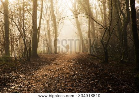 21/11/2019 Cornwall, Uk, An Elderly Person Enjoys A Walk With Their Dog In The Misty Winter Woodland