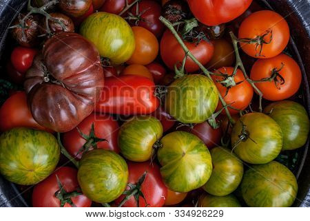 Colorful Organic Tomatoes On A Large Rounded Tray. Fresh Organic Red Yellow Orange And Green Tomatoe