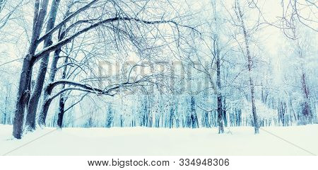 Winter landscape, snowy winter trees and snowdrifts in the winter forest. Winter snowy day scene. Colorful winter background, panoramic winter forest view