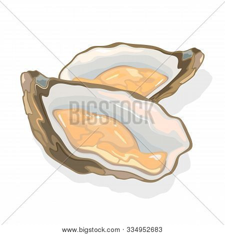 Opened Shellfish, Oysters With Soft Body In A Shell. Clam Bivalve Mollusk. Seafood For Gourmet. Exot