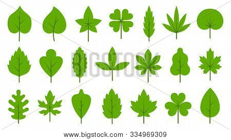 Green Leaf Flat Cartoon Icons Set. Eco Nature Organic Leaves Birch, Maple, Tropical, Poplar, Clover