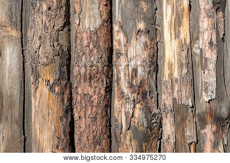The Texture Of The Old Log. Wooden Wall. Wooden Blockhouse, Fence. The Bark Is Covered With A Wooden