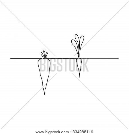 Continuous One Line Carrot In Ground . Two Carrots With A Large And Small Shoot. Appearances Are Dec