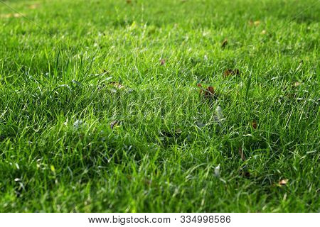 Fallen Leaves On Green Grass In Bright Sun