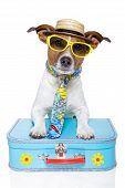 tourist dog with a hat , sunglasses and a bag poster