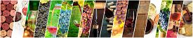 Wine Collage. A Panorama Of Many Photos Of Wine Glasses, Grapes At Vineyards, Corks, Tastings, Barre