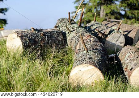 Firewood. Cut Trees. Cut And Cut. On The Grass