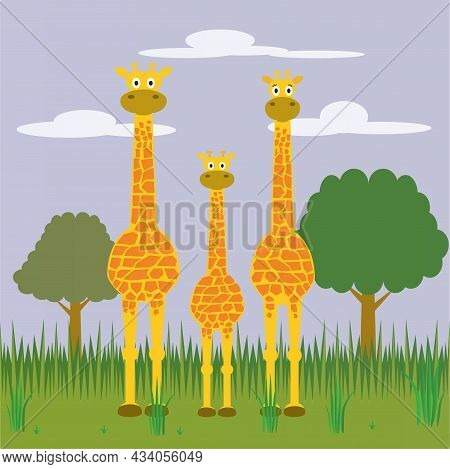 The African Savanna Is The Best Place For This Giraffe Family Despite The Difficulties Of This Afric