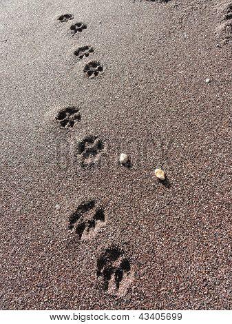 Beach Dog Pawprints