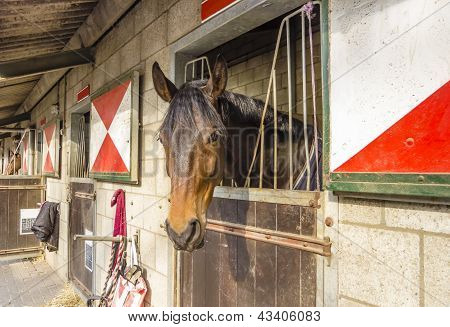 A Cute horse in it stall with color windows poster