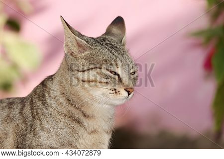 Close Up Profile View Face Of A Pet Tabby Cat And A Tabby Cat Posing For Sleep