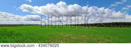 Green Grass Growing On Meadow Against Blue Sky With Clouds