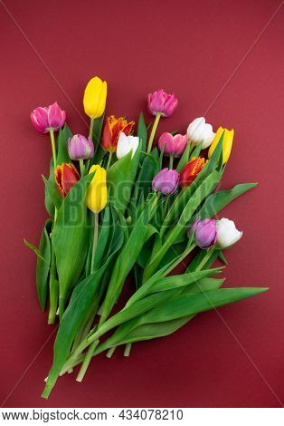 Multicolored Tulips On A Red Background. Spring Bouquet. Flowers Top View. Beautiful Tulip Flower Ba