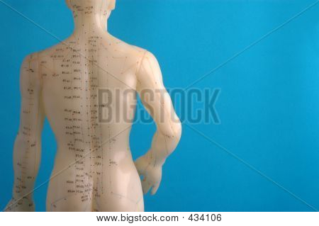 Acupuncture Model Back