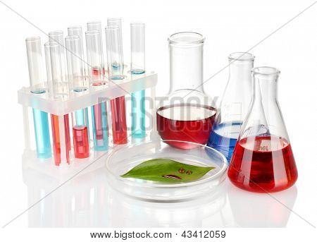Test-tubes and green leaf tested in petri dish, isolated on white