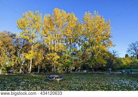 Sofia, Bulgaria -  November 01, 2020: Beautiful Corner Of Autumn Colorful Forest And The Lake Of Lil