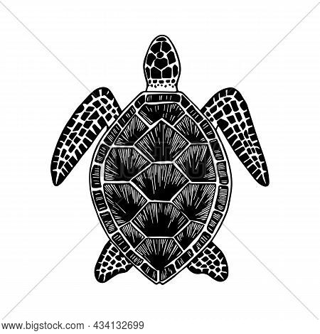 Turtle. Hand-drawn Stylized Image Of Turtle. Graphic Black And White Image Isolated On White Backgro