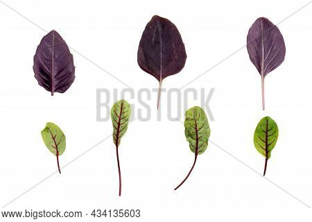 Sour Weed And Purple Basil Leaves Isolated On White Background.