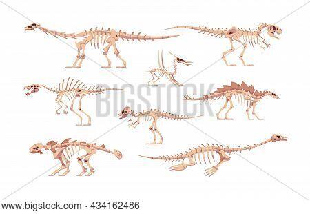 Dino Bones. Cartoon Dinosaur Skeletons For Kids Illustration. Skulls And Body Fossil Parts Of Jurass