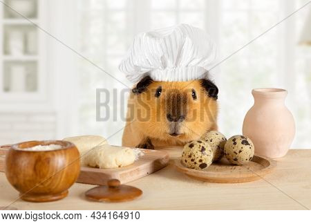Funny Guinea Pig In A Chef's Hat Cooks In The Kitchen