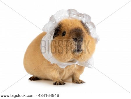 Funny Red-haired Guinea Pig In A Sleeping Cap Isolated On A White Background