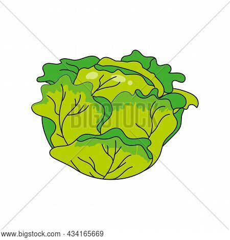 Cabbage Vegetable Hand Drawing Colorful Doodle Icon, Organic Farm Product. Vector Sketch Illustratio