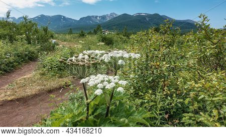 A Dirt Road Runs Through A Meadow. In The Foreground Is A Blooming Hogweed. A Parked Helicopter Is V
