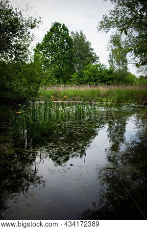 Pond Overgrown With Reeds Reflecting Sky And Surrounding Trees | Reflection Of Sky And Trees In The