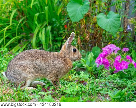 Close-up Of A Beautiful Cute Rabbit Sitting Among The Grass And Blooming In The Summer Afternoon. Pe