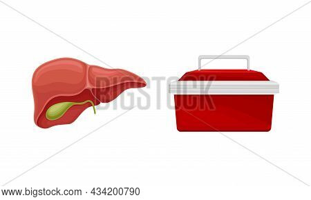 Liver With Gall Bladder Donor Organ And Cooler Box For Transporting Human Organs Cartoon Vector Illu