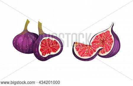 Fresh Ripe Delicious Juicy Figs Set. Whole And Cut In Half And Quarter Tropical Fruit Vector Illustr