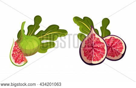 Fresh Ripe Delicious Figs Set. Whole And Cut Juicy Tropical Fruit Vector Illustration