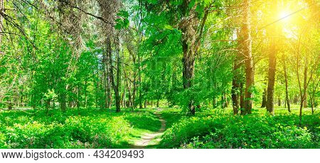 Path Through A Spring Forest In Bright Sunshine. Shallow Depth Of Field. Wide Photo.
