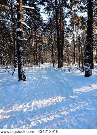 A Snow-covered Road In The Forest Before Christmas. A Cold Winter Landscape.