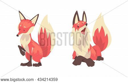 Fox Animal With Upright Ears, Pointed Snout And Long Bushy Tail In Different Poses Vector Set