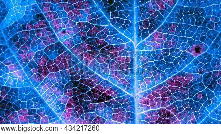 A Leaf Of A Tree Close-up. Dark Catchy Background Or Wallpaper. Mosaic Blue And Violet Pattern Of Ne