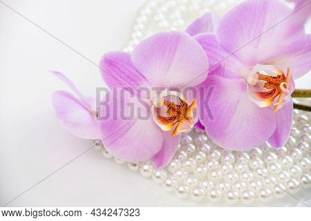 Pearl And Purple Orchid On A White Glas
