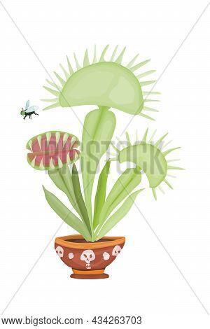 Venus Flytrap Dangerous Predatory Plant Botany New