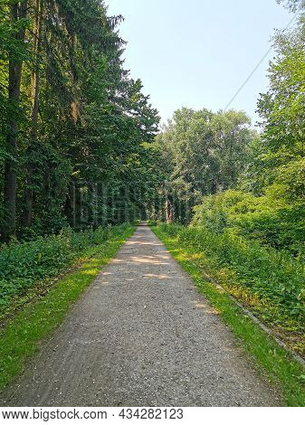 Scenic Beautiful Forest With Tall Green Trees, Lush Foliage And A Long Pathway