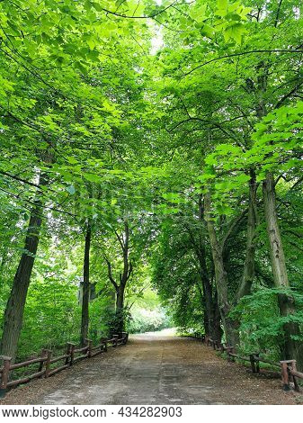 Scenic Beautiful Forest With Tall Green Trees, Lush Foliage And Pathway