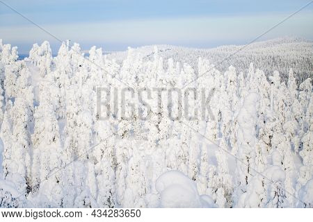 Majestic winter landscape with snow covered trees in Lapland Finland