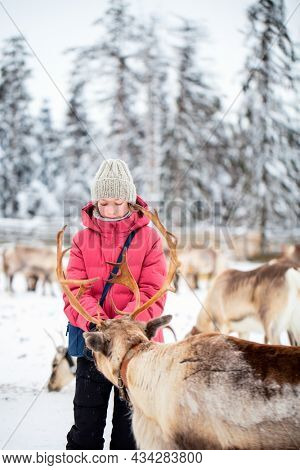 Cute pre-teen girl outdoors feeding reindeers on farm on sunny winter day in Lapland Finland