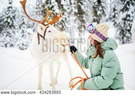 Young woman walking with white reindeer in winter forest in Lapland Finland