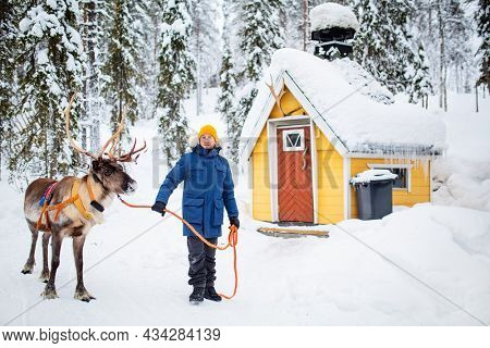 Young man walking with reindeer in winter forest in Lapland Finland