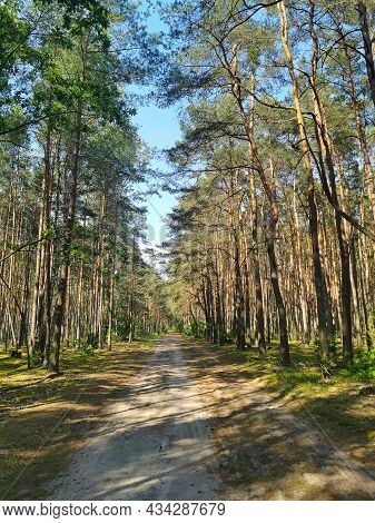 Scenic Forest With Tall Trees, Lush Foliage And Pathway On A Blue Sky Background. Nature Is Beautifu