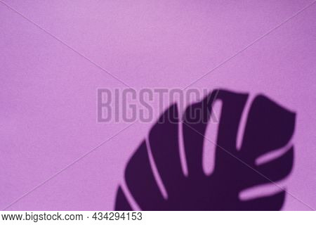 Trending Concept In Natural Materials With Palm Leaves Shadow On A Purple Background. Presentation W