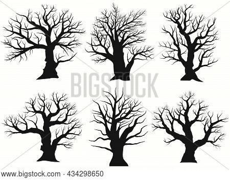 Tree Silhouette. Black Bare Oak Outline. Detailed Image. Vector