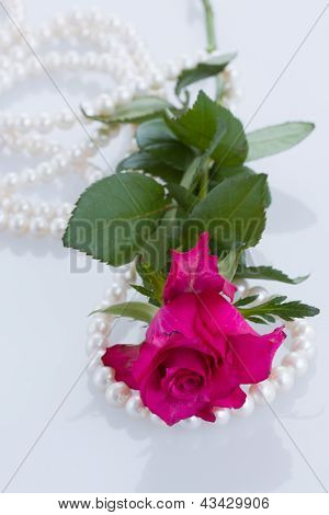 one pink rose with pearl necklace on white background poster