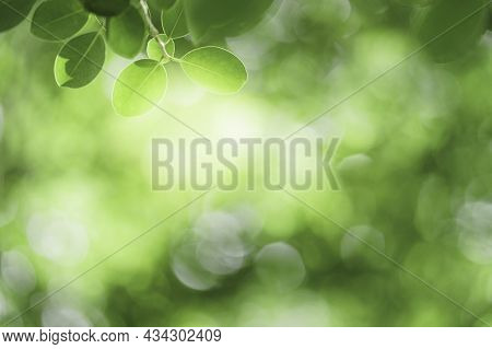 Closeup Beautiful View Of Nature Green Leaf On Greenery Blurred Background With Sunlight And Copy Sp